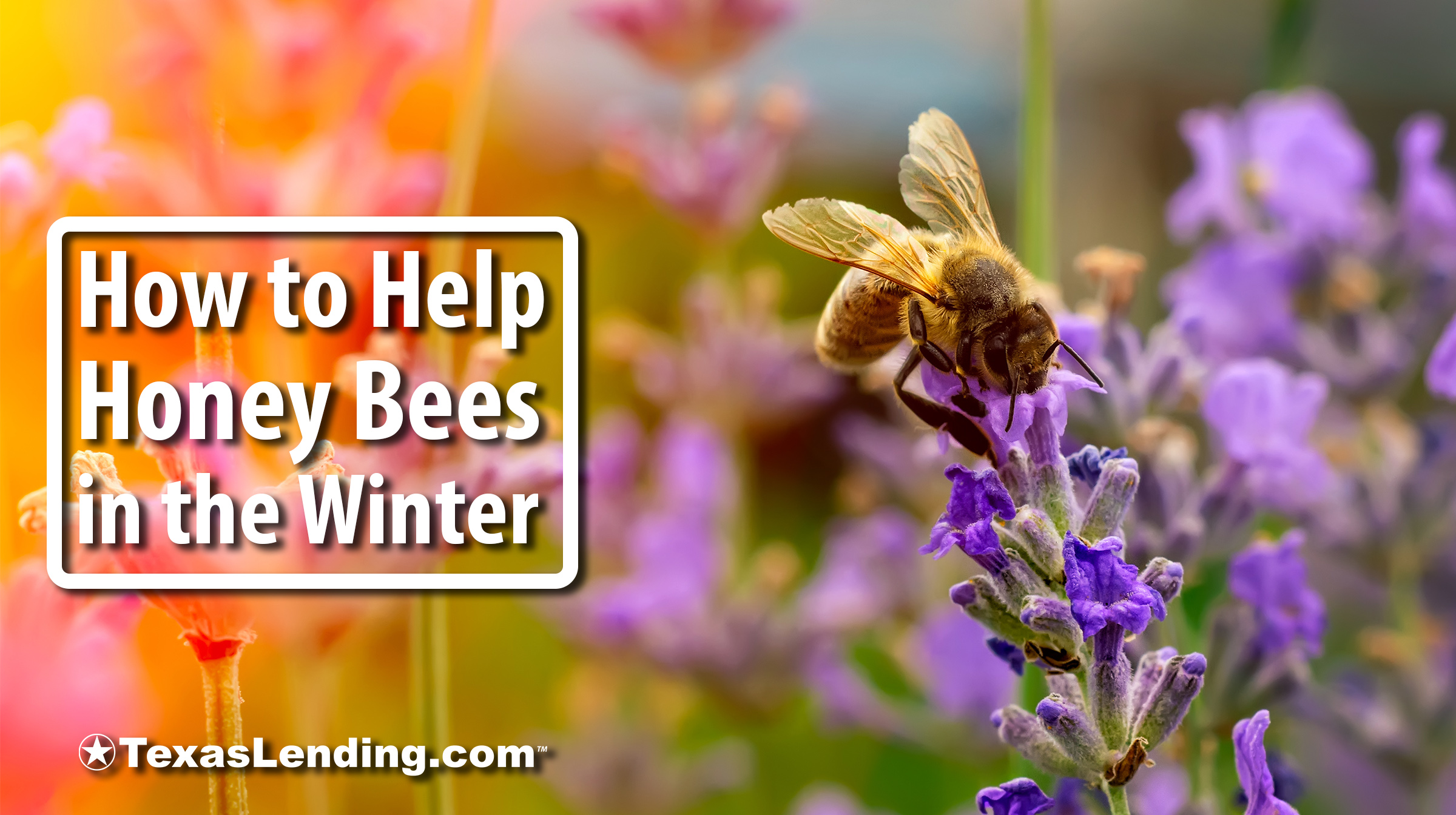 help the honey bees